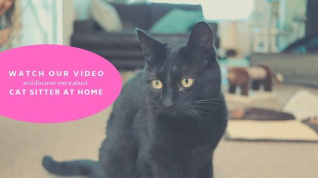 CSAH Cat Video