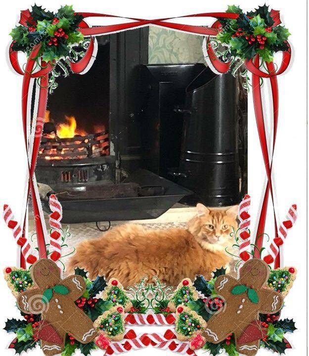 Cat sitter cat minder cattery